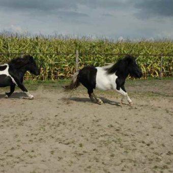 Teambuilding met paarden Drenthe 1 700x465 1 - Tijd voor ontwikkeling - Groepsactiviteiten, workshops, teambuilding en trainingen Drenthe