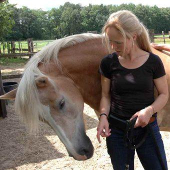 Teambuilding met paarden Drenthe 2 - Tijd voor ontwikkeling - Groepsactiviteiten, workshops, teambuilding en trainingen Drenthe