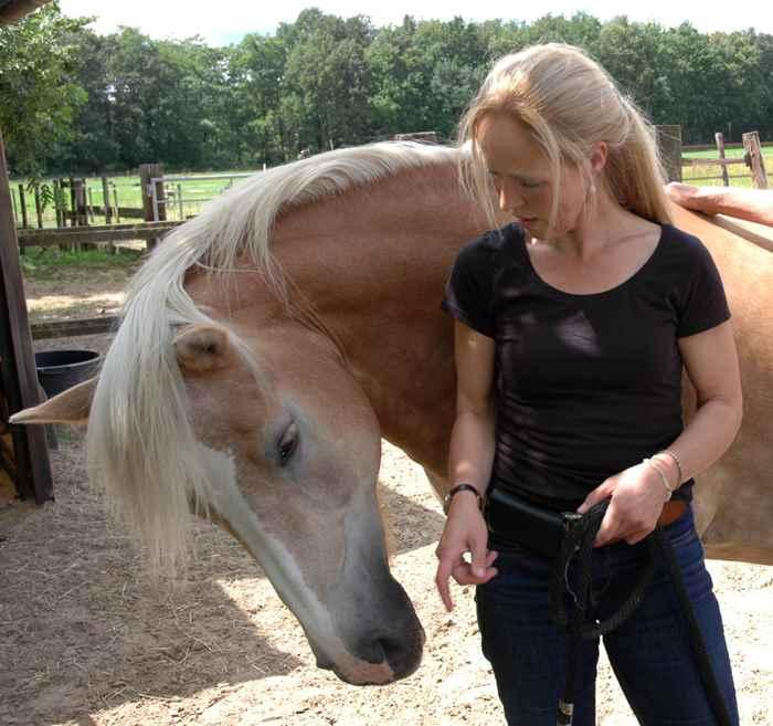 Wat kunnen jullie leren tijdens het werken met de paarden?