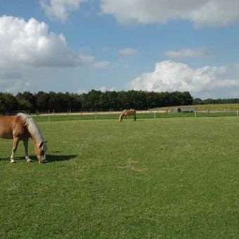 Teambuilding met paarden Drenthe 4 700x465 1 - Tijd voor ontwikkeling - Groepsactiviteiten, workshops, teambuilding en trainingen Drenthe