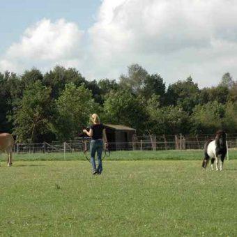 Teambuilding met paarden Drenthe 5 700x465 1 - Tijd voor ontwikkeling - Groepsactiviteiten, workshops, teambuilding en trainingen Drenthe